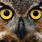 Zdjęcie profilowe I can fly